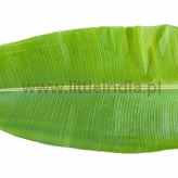 Banana Leaf (Only by order) 1kg