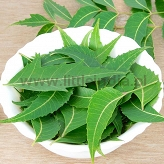 Neem Leaves (Only by Order) 1kg
